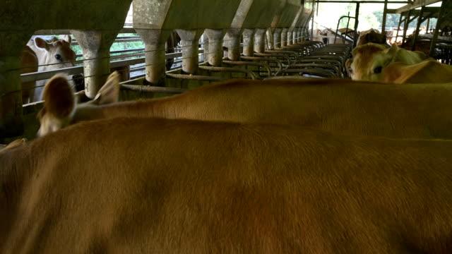 Modern Dairy Farm video
