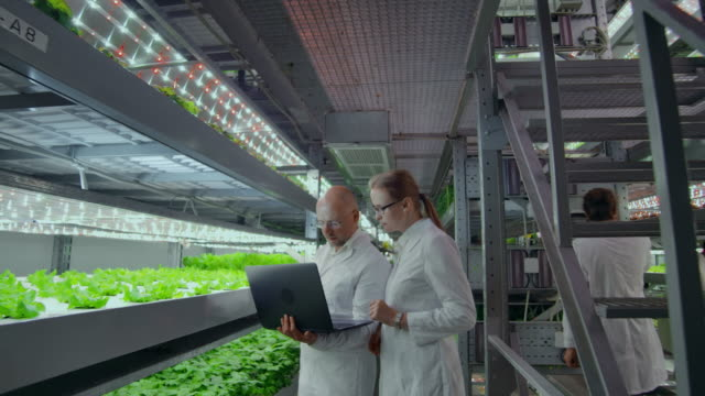 modern farmers of the future monitor the growth of plants and grow pure non-modified natural products in vertical farms with hydroponics - scienziato video stock e b–roll