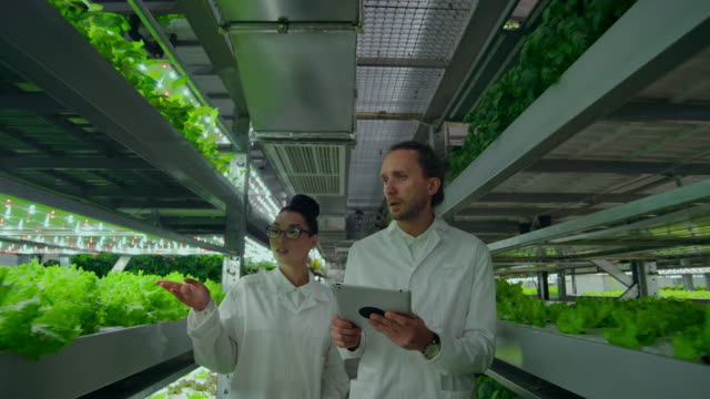 Modern farmers of the future monitor the growth of plants and grow pure non-modified natural products in vertical farms with hydroponics Modern farmers of the future monitor the growth of plants and grow pure, unmodified natural products in vertical farms with hydroponics. The camera moves on gimbal hydroponics stock videos & royalty-free footage