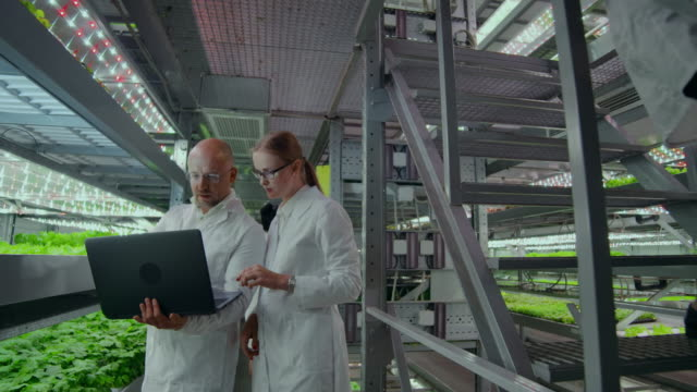 modern microbiology laboratory, two scientists with a laptop discussing the results of research on genetically modified products. - insetticida video stock e b–roll