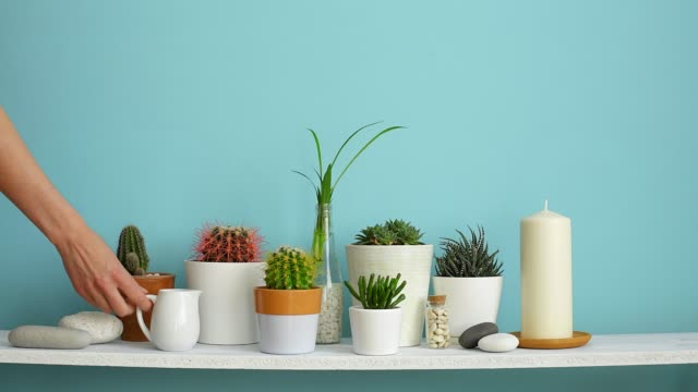 modern room decoration with picture frame mockup. white shelf against pastel turquoise wall with collection of various cactus and succulent plants in different pots. hand is watering them. - arredamento video stock e b–roll