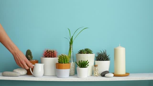 resim çerçevesi mockup ile modern oda dekorasyonu. farklı tencere çeşitli kaktüs ve etli bitkiler koleksiyonu ile pastel turkuaz duvara karşı beyaz raf. el onları suluyor. - bahçe ekipmanları stok videoları ve detay görüntü çekimi