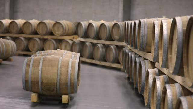 modern wine cellar full of wooden casks - azienda vinicola video stock e b–roll