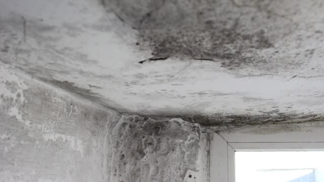 Mold In House On Walls Ceiling Windows Stock Video More Clips Of