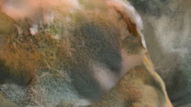食品のマクロで金型します。 - 腐敗点の映像素材/bロール