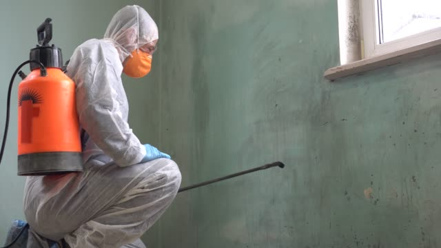 Mold Removal Services. Assessment, Contamination Control, Removal, Cleaning and Disinfecting, and Moisture Control