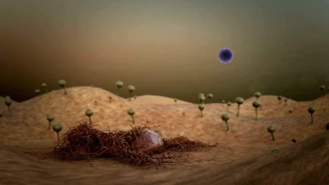 stockvideo's en b-roll-footage met mold spores - dierenhuid huid