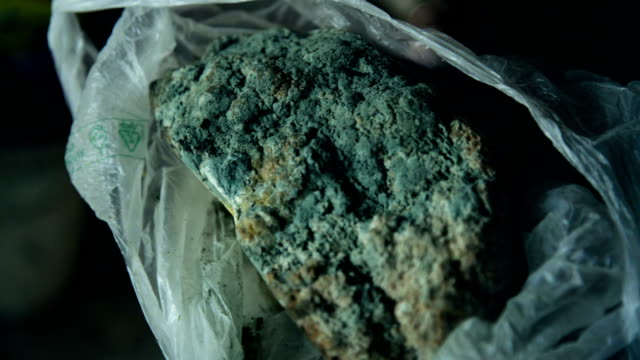 Moldy loaf of bread video