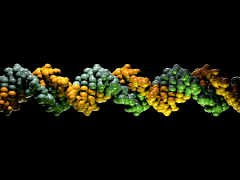 DNA Molecule Model - PAL A model of a strand of DNA. Black background. Seamless loop. biochemistry stock videos & royalty-free footage