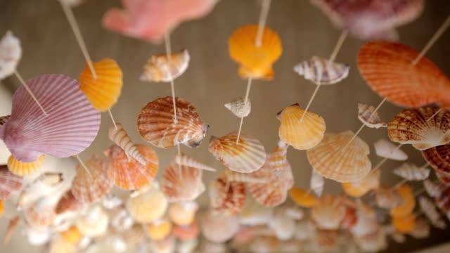 Mollusk Shells video