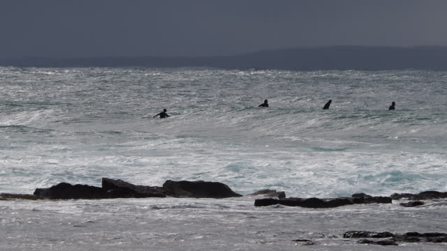 Mollymook Surfers