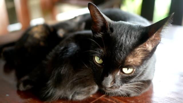 vídeos de stock e filmes b-roll de mom cat feeding her kittens - felino