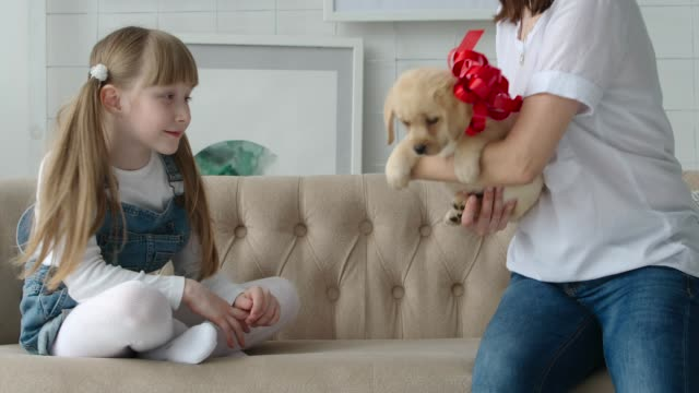 Mom gives daughter a puppy with a red bow Mom gives daughter a puppy with a red bow puppy stock videos & royalty-free footage