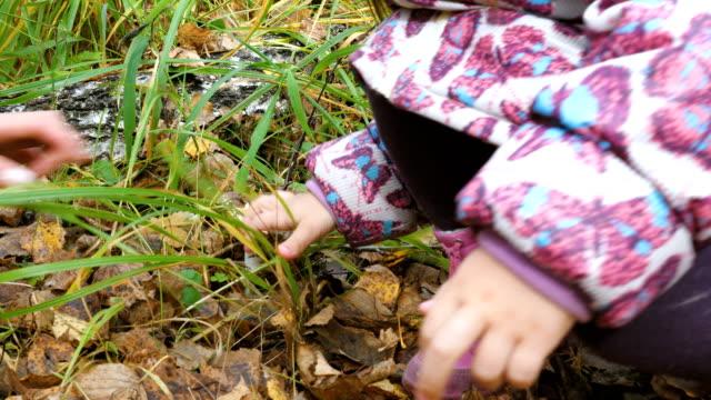 mamma lär sin lilla dotter att plocka svamp. - höst plocka svamp bildbanksvideor och videomaterial från bakom kulisserna