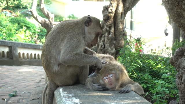 mammas kärlek - djurfamilj bildbanksvideor och videomaterial från bakom kulisserna