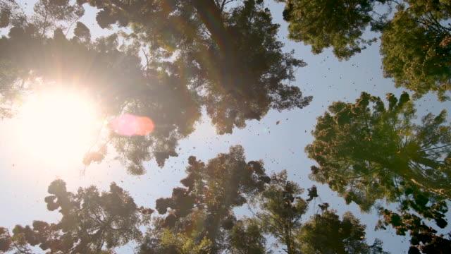 monarch butterflies forest at sunset - farfalla ramo video stock e b–roll