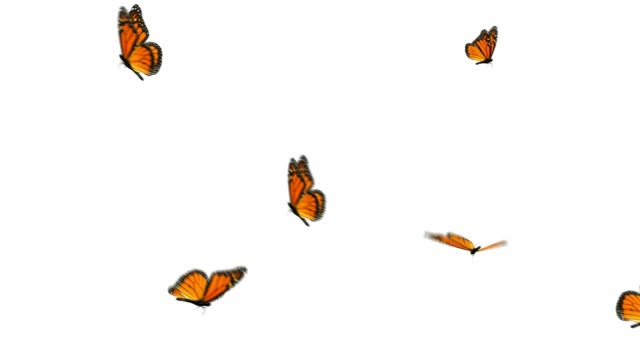 monarch butterfly group - butterfly stock videos and b-roll footage