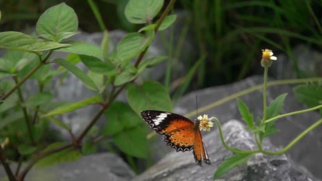 monarch butterfly on small flower super slow motion - farfalla ramo video stock e b–roll