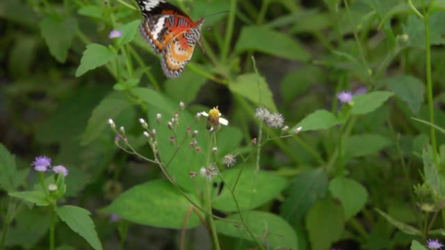 Monarch Butterfly On Small Flower Super Slow Motion