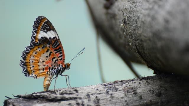 farfalla monarca - farfalla ramo video stock e b–roll