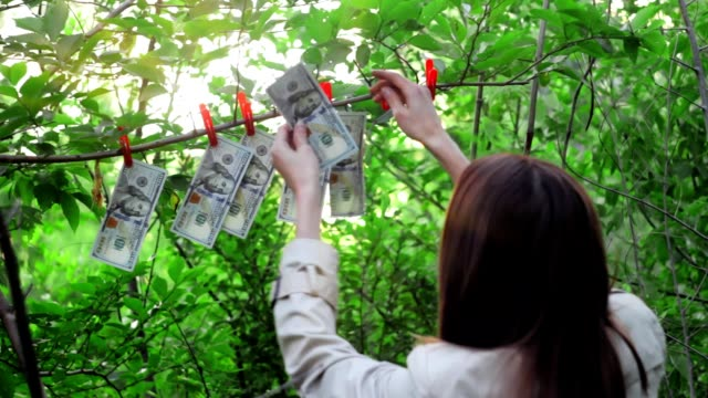 Money growing on a tree, a beautiful girl picks dollars from the branches