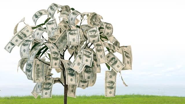 Money Growing video