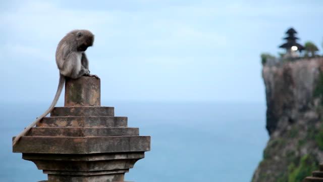 Monkey in Tempel – Video