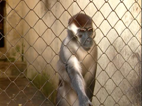 monkey hinter dem zaun - aquarium oder zoo stock-videos und b-roll-filmmaterial