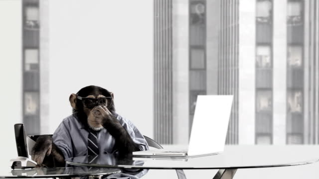 stockvideo's en b-roll-footage met monkey business office - mensaap