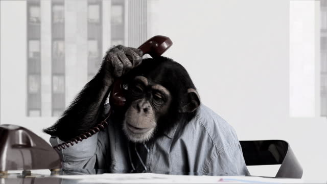 Monkey Business Office video