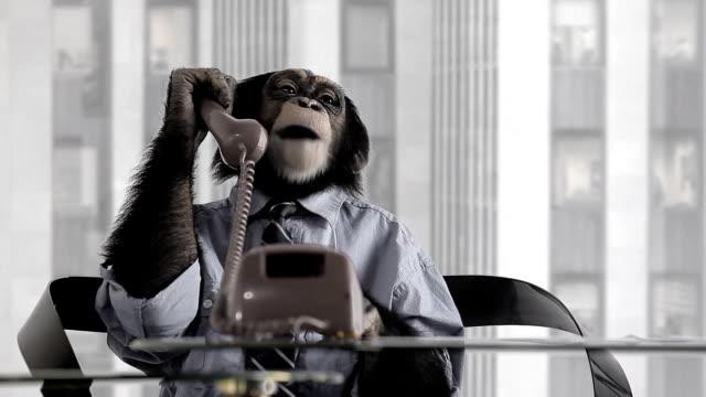 Monkey Business-Büro – Video