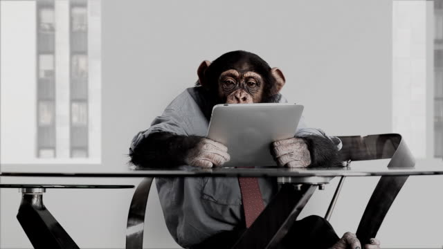 monkey business office - monkey stock videos and b-roll footage