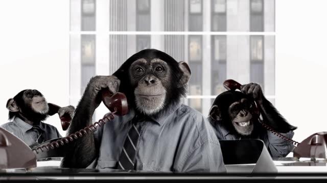 Monkey Business Service