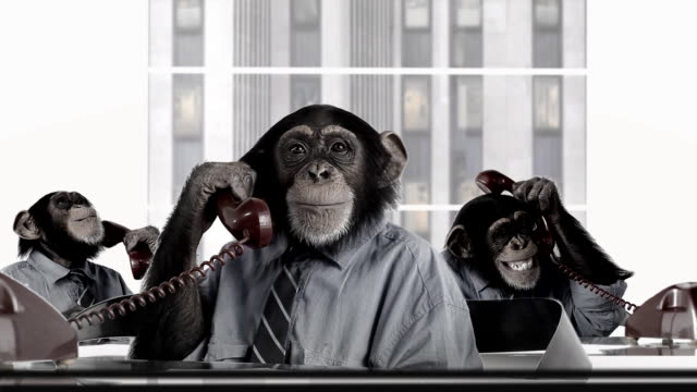 Monkey Business Service video