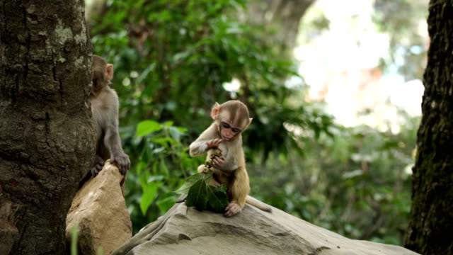 monkey cub in the jungle - primate video stock e b–roll