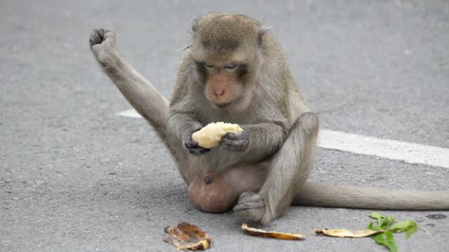 monkey eating banana. - primat bildbanksvideor och videomaterial från bakom kulisserna