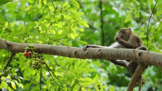 Monkey Eating on Tree video