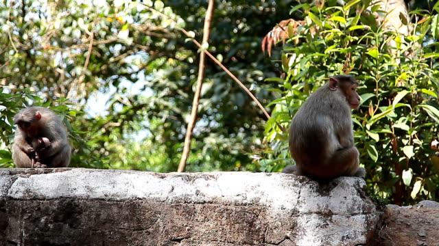monkey family in the tropical forest - уход за поверхностью тела у животных стоковые видео и кадры b-roll