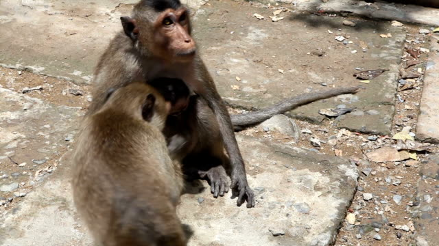 Monkey family interacting with some random tourists walking away