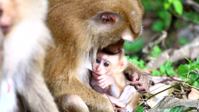 Monkey Familie. – Video