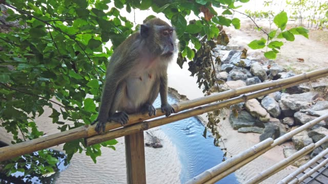 monkey from tree in jungle forest - sud est video stock e b–roll