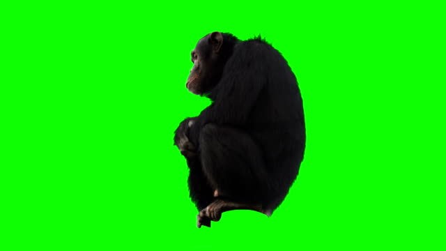 stockvideo's en b-roll-footage met monkey green screen - mensaap