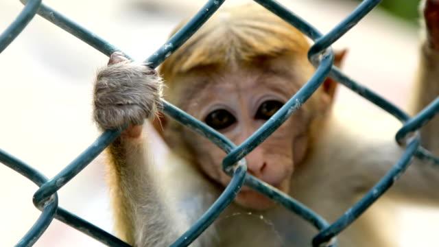 affen in einem käfig im srilanka - käfig stock-videos und b-roll-filmmaterial