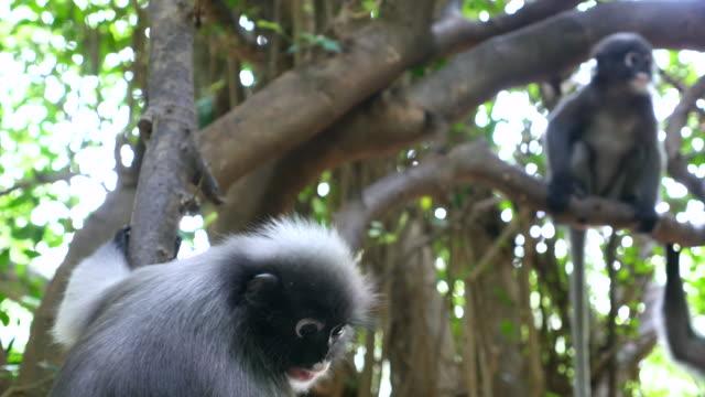 Monkey in a wild video