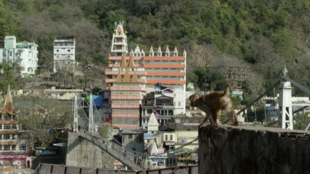 Monkey in front of a yoga house. video