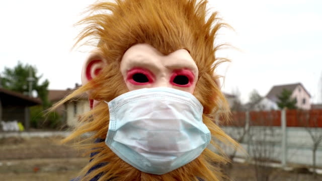 monkey in medical mask outdoors looking scared shocked and frustrated monkey in medical mask outdoors looking scared shocked and frustrated video mask disguise stock videos & royalty-free footage