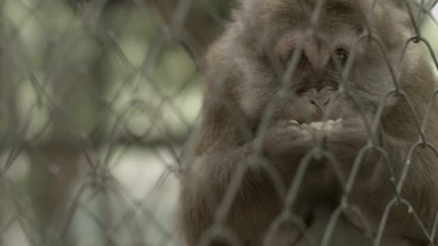 Monkey In Zoo video