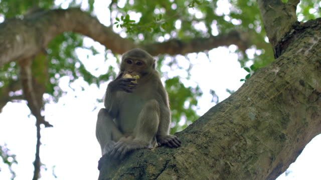 Monkey is eating fruit while sitting on tree video