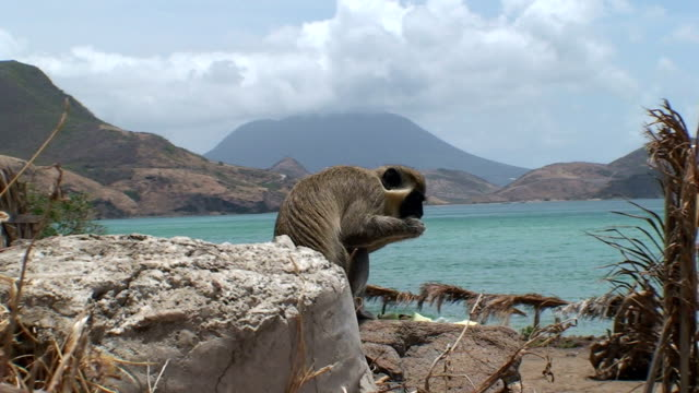 Monkey Island A monkey eats on a tropical beach with a volcano in the background. blue monkey stock videos & royalty-free footage