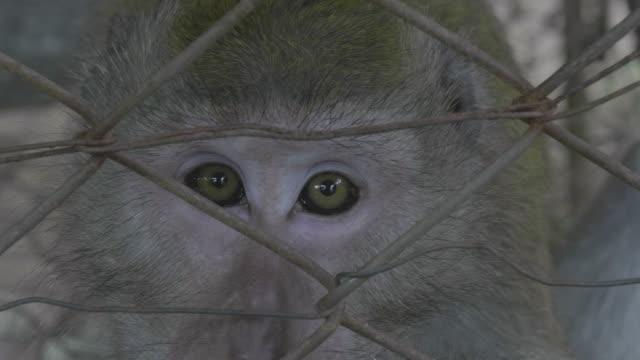maymun kıçlı makak - makak maymunu stok videoları ve detay görüntü çekimi